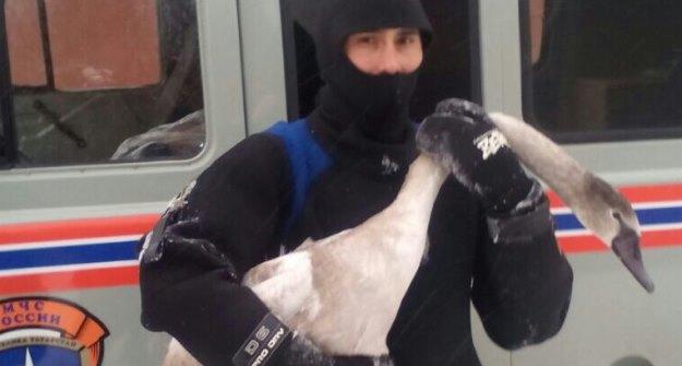 ВКазани работники МЧС спасли 3-х лебедей
