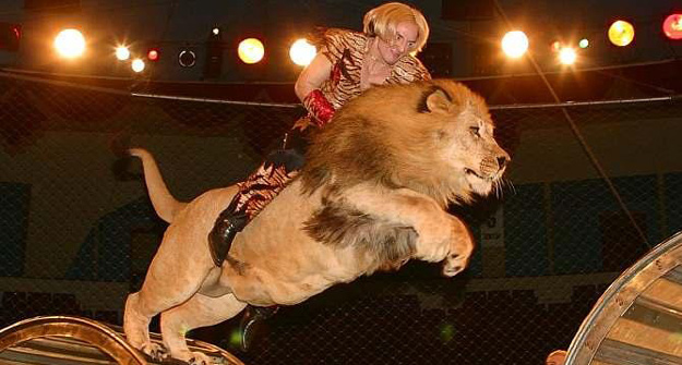 -бесплатные фото львов и попугаев: