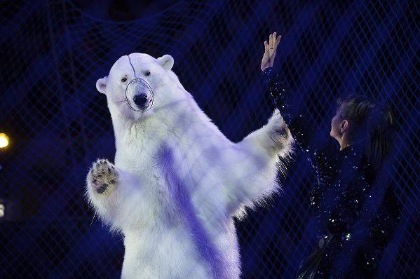 Гастроли цирка на льду в Казани. Фото: kirstenluce/instagram.com