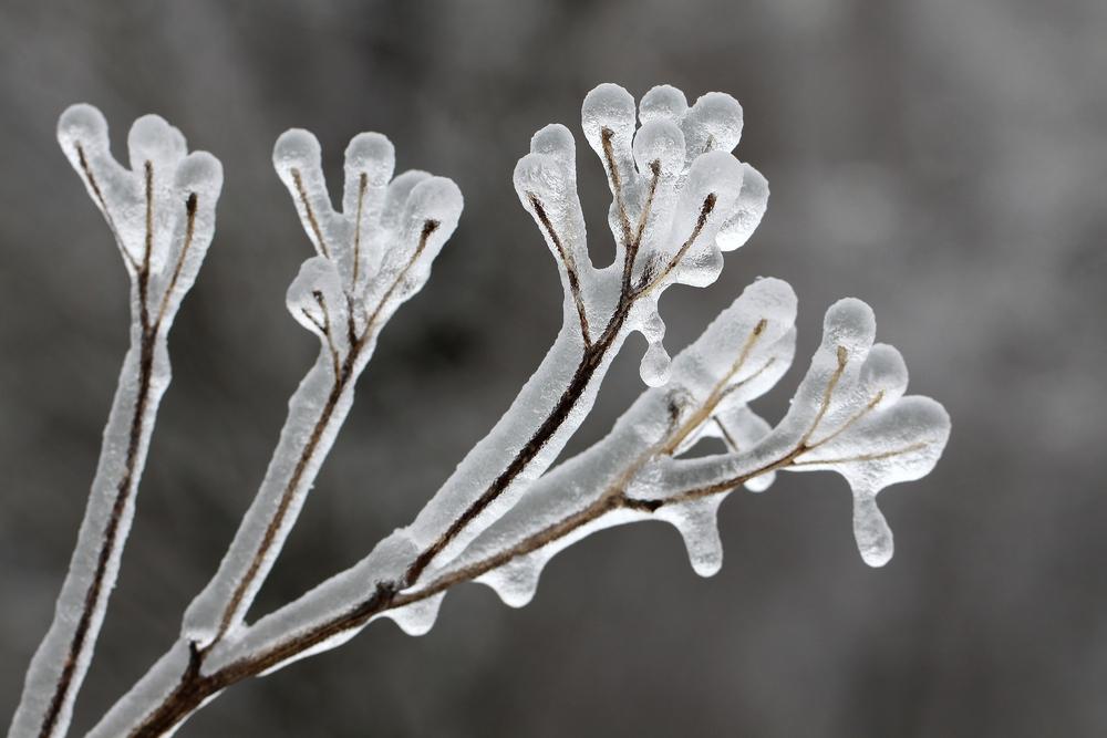 Ожидаются заморозки икратковременные дожди. Прогноз погоды вУльяновске на12мая